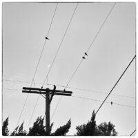 birds-wires
